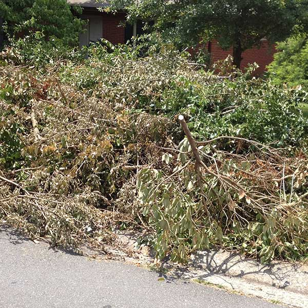 Removing and recycling yard waste such as trimmings and trees